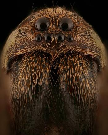 Гипнотизирующие макроснимки насекомых, после которых начинает казаться, что эти существа с другой планеты