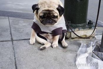 Обиженные собаки, навсегда потерявших доверие к своим владельцам