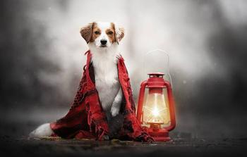 Изобретатель из Британии создал уличный фонарь, который работает на собачьих экскрементах
