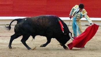 Как на самом деле красный цвет действует на быка?