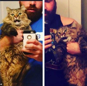 18 кошек, с которых хватит глупых человеческих штучек их хозяев
