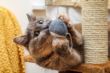 8 августа Всемирный день кота: шьем игрушки для кошки своими руками