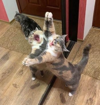 Горемычные котики, с которыми что-то стряслось, а что – непонятно