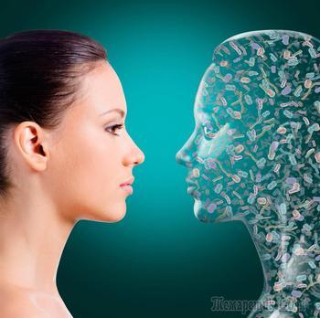 Невидимый орган весом 2 килограмма — микрофлора человека. Зачем он нам нужен?