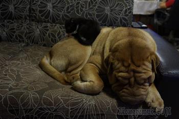 Как кошка с собакой?