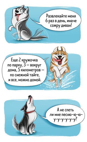 Честный гид по породам собак от первого лица