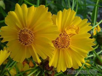 Сколько же цветов прекрасных, ярких! Сколько тайн они в себе хранят? Пусть их будет больше – Нежных, жарких... И сколько счастья вам Вам они дарят!