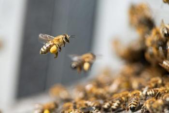 Шок: пчёлы умеют различать лица!
