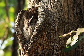 37 фотографий о том, что природа нас любит