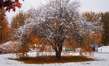 Что делать, если осенью не успели посадить саженцы и выкопать луковицы цветов