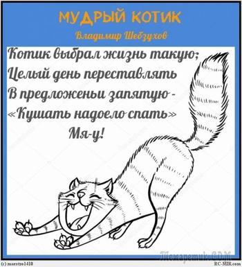 Мудрый котик