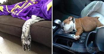 20 фотографий очень уставших домашних животных