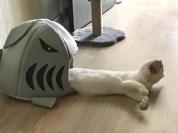 Коты, у которых была всего секунда, чтобы прославиться, и они воспользовались ею сполна