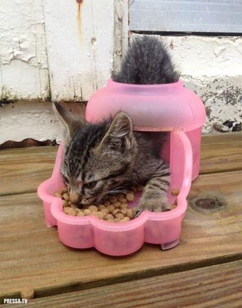 Прикольные коты и кошки, попавшие в неожиданные ситуации