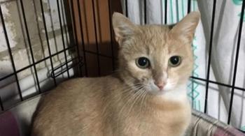 Бездомная кошка прокралась в подъезд и родила котят в детской коляске