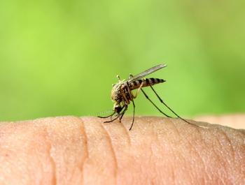 Средства от комаров, которые не навредят здоровью