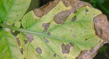 Обзор и методы лечения болезней комнатных растений
