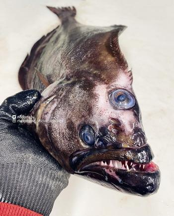 Мурашки по коже: 7 жутких фото рыб, после которых вы вряд ли отважитесь лезть в воду
