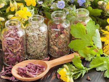 Растения-обереги и их использование в повседневной жизни