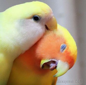 20 курьезов с птичками, которые оказались тем еще веселым хулиганьем