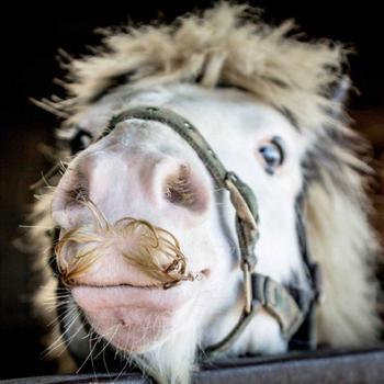 Если вам вдруг взгрустнулось, просто взгляните на этих усатых лошадок