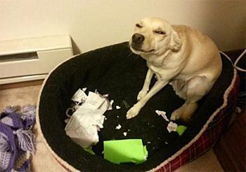 Доказательство того, что собаки могут быть настоящими засранцами