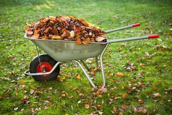 Осенняя подкормка сада - что, чем и когда