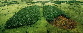 11 эко-идей, или как помочь природе, не напрягаясь