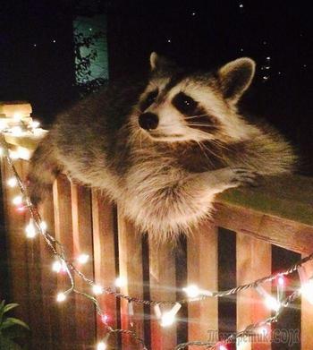 23 смешных животных без принципов, которым плевать абсолютно на всё