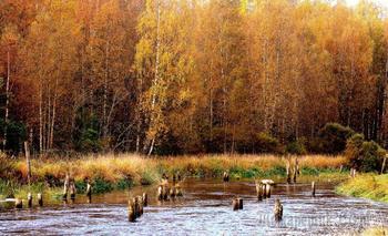 Осеннее...   Санкт-Петербург.