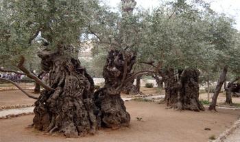 Что посмотреть в Иерусалиме из достопримечательностей?