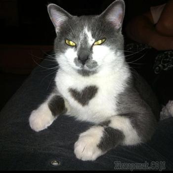 Меховое сердце: 15 особенных котов