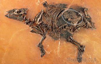Останки вымерших животных, которые удивили учёных