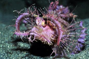 10 самых причудливых рыб мирового океана