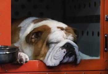 Выставка собак Westminster Kennel Club 2020