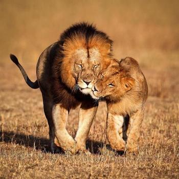 Влюбленные животные, от которых мимиметр зашкаливает