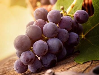 Лучшие сорта столового винограда: правила выбора