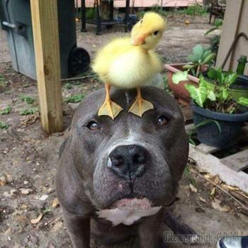 19 фото собак, в очередной раз доказавших, что они не только милашки, но и лучшие друзья человека
