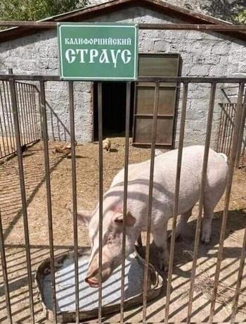 Весёлые короткие анекдоты