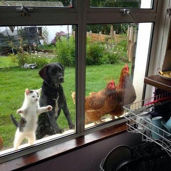Животные, которые ну очень хотят зайти внутрь