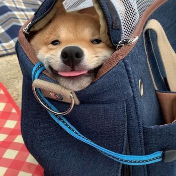 Щенок с самой очаровательной улыбкой в мире