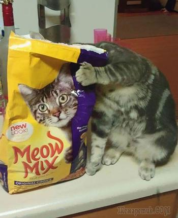 Найди кота: 25 котов, знающих толк в маскировке