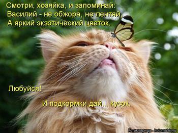 Забавное зверьё;))
