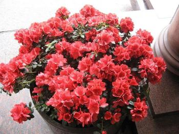 Виды комнатных растений: 8 основных групп