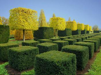 Традиции зеленой геометрии: Топиарная стрижка деревьев на фото из разных парков мира