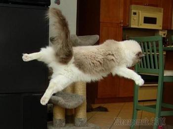 Коты, которые умеют летать