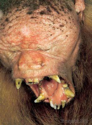 10 самых некрасивых животных на планете