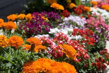 Секреты оформления цветников из летников