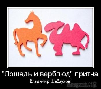 «Лошадь и верблюд» Читает: Мира Максименко