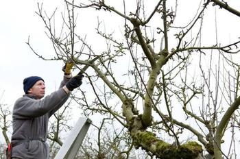 7 техник обрезания веток, чтобы дерево исцелялось без проблем